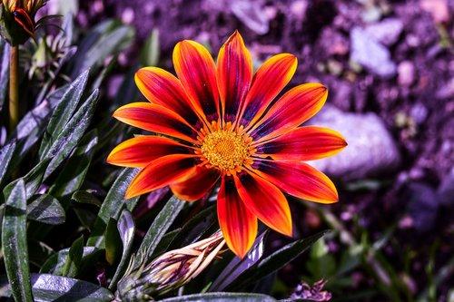 gėlė graži, pobūdį, augalų, graži gėlė