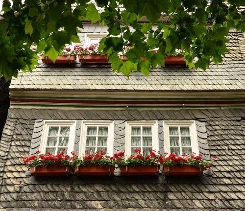 gėlių dėžutės,namai,langas,fasadas,skalūno fasadas,architektūra,Senamiestis,senas,namo fasadas,pastatas,Hauswand,geranium