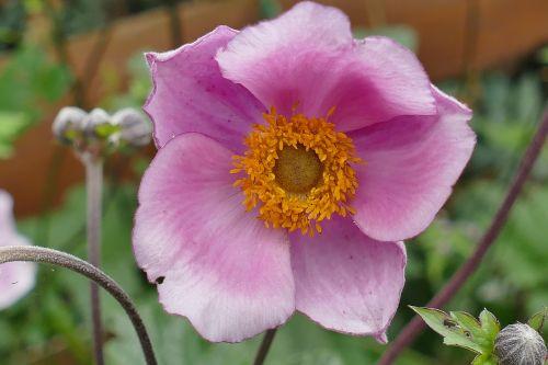 gėlių sodas,makro,augalas,gėlė,makrofotografija