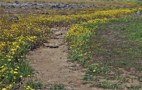 kelias, purvo & nbsp, takas, vaikščioti, vaikščioti, gėlės, laukas, meno, dažytos, gėlių pamušalas purvo kelias