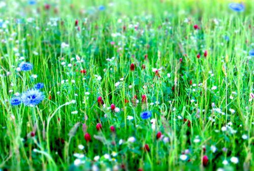 Gėlių Pieva, Gėlės, Pieva, Gamta, Vasara, Žydėti, Pavasaris, Pavasario Pieva, Laukinės Gėlės, Spalvinga, Gražus, Augalas, Žolė, Žalias, Sodas, Vasaros Pieva, Spalva