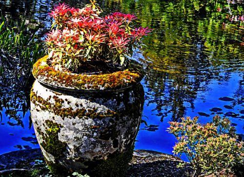 lagūnas, vanduo, puodą, gėlė & nbsp, puodą, gėlės, atspindinti, ramus, ežeras, botanikos, sodai, gėlių puodą lagūnoje