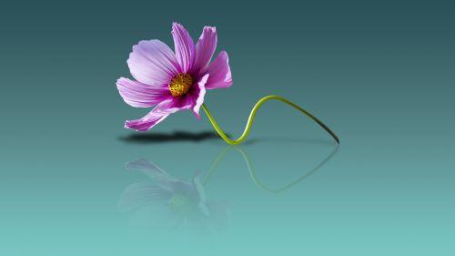 gėlių tapetai,gėlių fonas,gėlių vaizdas,šviežias,gėlių saule,natūralus,gamta,gėlių gamta,gėlė,mielas gėlė,žiedas uždaras,gėlių detalės,gėlių vaizdas,gėlių mielas,spalvinga,gėlė nuostabi,puiki gėlė,gražus,nuostabi gėlė,lauko gėlė,vasaros gėlė,gėlių,žiedas,vasara,pavasaris,žydėti,dizainas,apdaila,žydi,botanikos,rožinis,žalias
