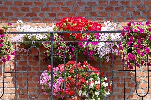 žydintis balkonas, žydi, vasara, vazų, balkonas