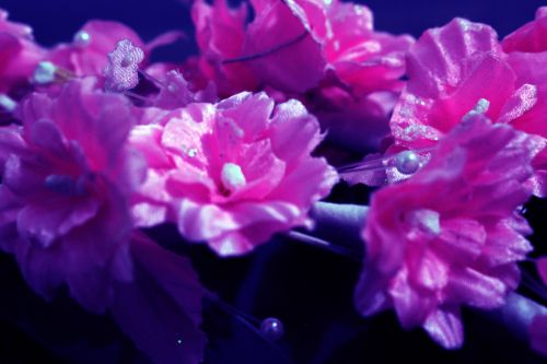 gėlės, žiedlapiai, fonas, perlas, žiedadulkės, objektas, tapetai, gėlės 06