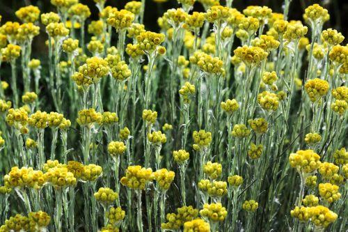 gėlės,spalva,lauke,gėlė,spalvos,gamta,pavasaris,spalvinga,laukas,saulėta diena,gamtos grožis,žalias,fonas,grožis,geltona