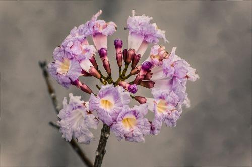 gėlės,gėlė,rosa,subtilus gėlė,pavasaris,vazos,Moteris,subtilus