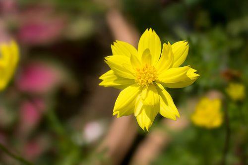 gėlės,mediena,catharanthus roseus,gamta,geltona,baltos gėlės,puokštė,kriauklė,geltonos gėlės,krūmų gėlės,rausvos gėlės,gėlių sodas,medetkų gėlė,sodas,medžio dekoras,balta,tūkstantis rožių,medienos rūšis,mažos baltos gėlės,mažos gėlės,fonas,gėlė,žydi,raudona,kviečiamas aplankyti,dok pakviestos auditorijos,rožinis,žolė,šviežios gėlės,augalas,gaivus