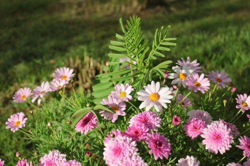 gėlės,klasteris,kraštovaizdis