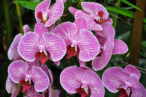 gėlės,orchidėjos,ny botanikos sodai,gamta,rožinis,sodas,botanikos