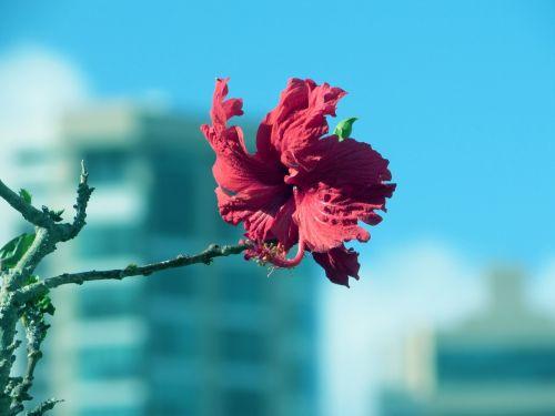 gėlės,flora,gamta
