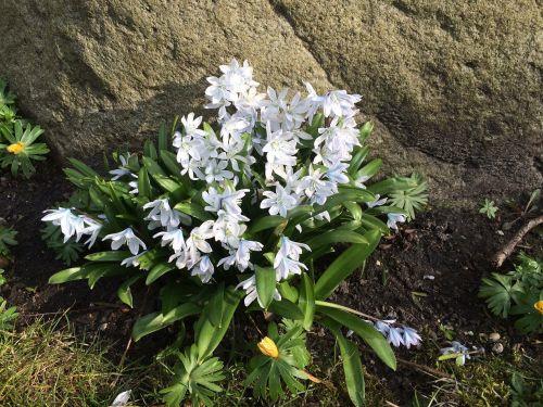 Gėlės, Turėti, Gražus, Natūralus, Denmark, Ro, Grožis