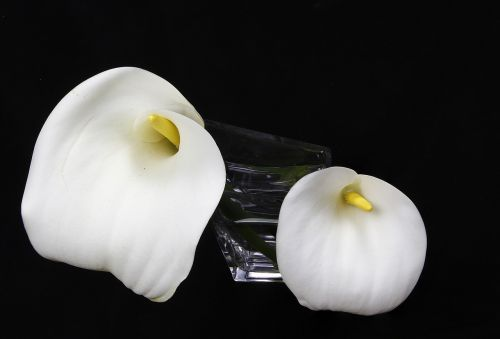 gėlės,alcatraz white,vazos gėlės,baltos gėlės,alcatraz,balta gėlė,pavasaris,gamta
