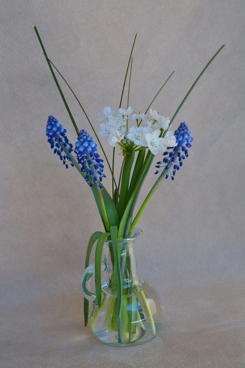 gėlės,vazos,gėlių vaza,stiklo vazos,pavasario gėlės,Uždaryti,mėlynos gėlės,baltos gėlės,vynuogių hiacintas,deko,apdaila,natiurmortas,gėlių fotografija