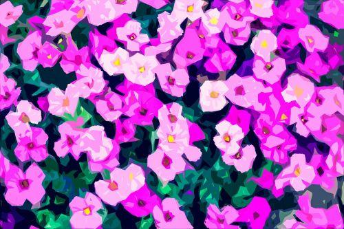 gėlės,sodas,gėlių kilimas,purpurinės gėlės,rožinės gėlės,dekoratyvinės gėlės,gėlių fonas,sodo gėlės
