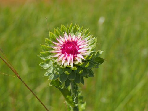 gėlės,gėlė,lauko gėlės,gamta,graži gėlė,vasaros gėlės,augalas,gražios gėlės,Iš arti,žydėti,gėlių laukas,laukinės gėlės,ryskios spalvos