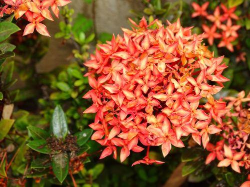 gėlės,gamta,sodas,augalas,trapi,pavasaris,apdaila,gėlė,dangus