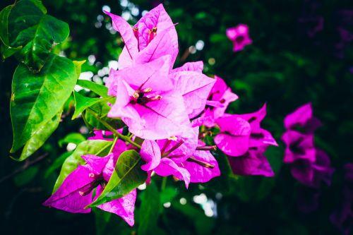 gėlės,niūrus,ถึ บ