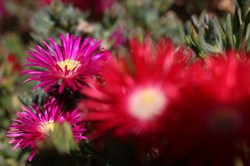 Gėlės, Gamta, Raudona, Oranžinė, Augalai, Sodas, Flora, Makro, Geltona, Laukiniai, Kraštovaizdis, Parkas, Laukinė Gėlė, Kokonas, Žalias, Botanika, Žmonės, Spalvos, Laukinės Gėlės, Šviesa, Pavasaris, Grožis, Įvairovė, Laukinė Flora