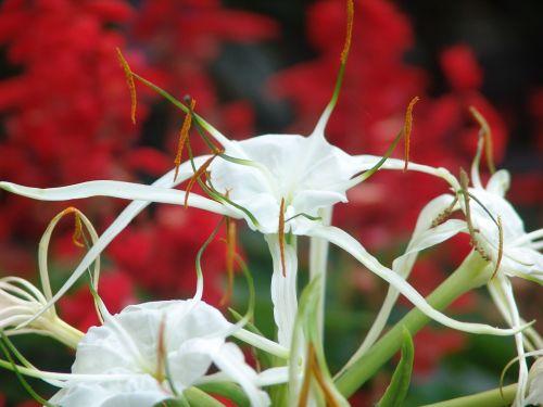 gėlės,atogrąžų,spalva,sodas,botanikos,parkas,egzotiškas,botanikos sodas,žiedas,žydėti,gėlė