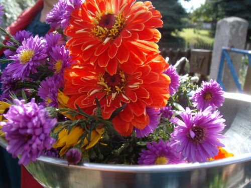 gėlės,sodas,asters,herbstaras,zinnia,oranžinė,kompozitai,spalvinga