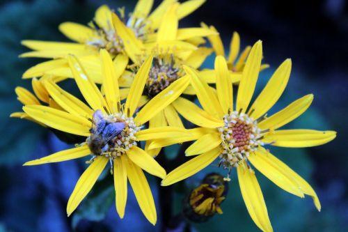 gėlės,sodas,vasara,Namai ir sodas,gėlių vasara,gamta,floksas,augalas,geltona