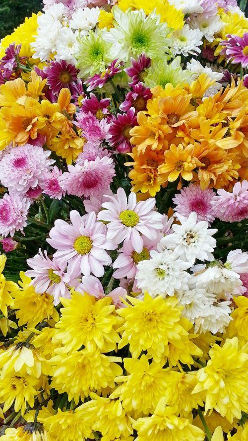 gėlės,gėlė,graži gėlė,sodo gėlės,geltona gėlė,gamta,vasaros gėlės,gražios gėlės,vasaros gėlė,žydėti,augalas,geltonos gėlės,gėlių laukas,laukinės gėlės,lauko gėlės,baltos gėlės,ryskios spalvos,rožinė gėlė,balta gėlė,sodas,Iš arti,šviesus,vasara,fonas
