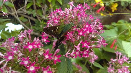 gėlės,vabzdžiai,gamta