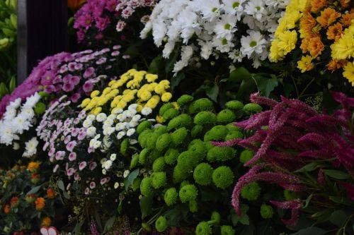 gėlės,rožė,laukiniai,milteliai,rožinės gėlės,gamta,augalas,augalai,žalia gėlės,raudonos gėlės,baltos gėlės,geltonos gėlės
