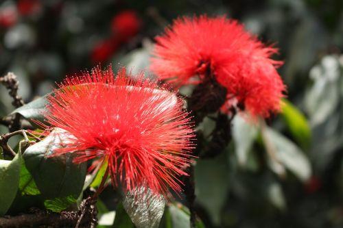 gėlės,natūralus,gėlė,gamta,grožis,pavasaris,Natūralus grožis,sodas,sodai,žydėjimas,graži gėlė,žiedlapiai