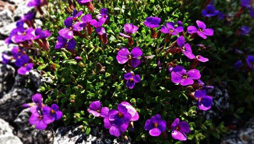 gėlės,pieva,gamta,delikatesas,gėlė,mažos gėlės,vasara,augalas