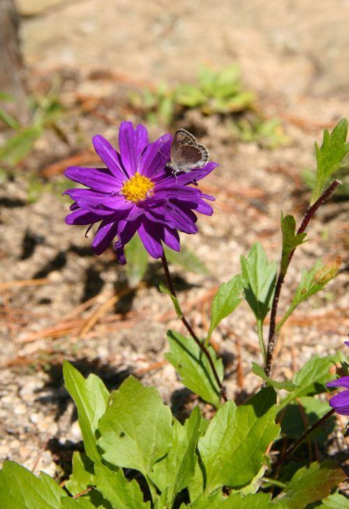 gėlės,drugelis,vabzdžiai,gamta,augalai,laukas,parkas