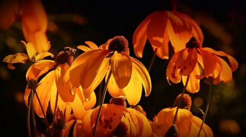 gėlės, oranžinė, oranžinės žiedlapiai, oranžinis žiedas, žiedlapiai, gamta, vasara, oranžinės gėlės, sodas, gėlės žiedlapiai, spalva oranžinė, žydėjo, pavasaris, vabzdys, geltona, vasaros gėlė, žydėjimas, augalas, be honoraro mokesčio