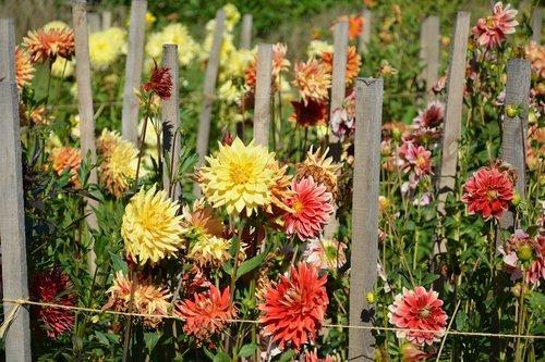 gėlės, pavasaris, SL, Sodas, pobūdį, žydėti gėlės, Slovakija