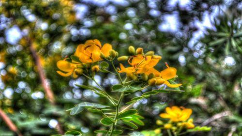 gėlės,geltona,flora