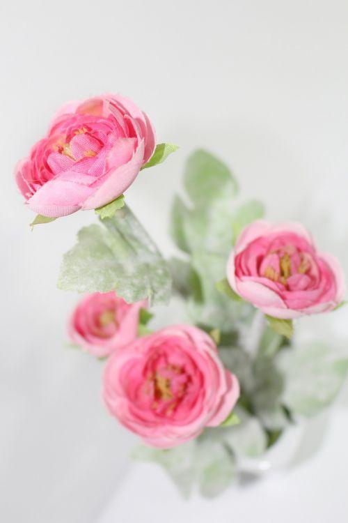 gėlės,pasodintas augalas,harmonija,ornamentas,rožinis,rožė