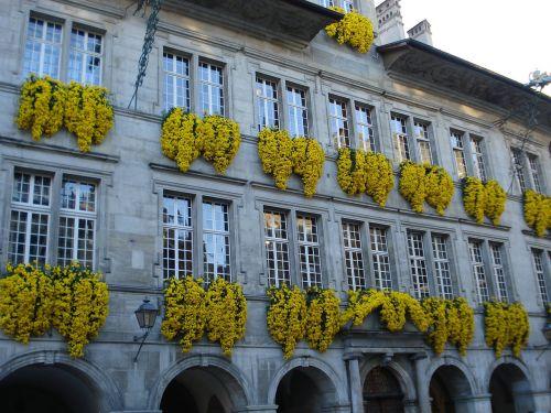 gėlės,miesto rotušė,Lausanne,Šveicarija,geltona,fasadas,namas