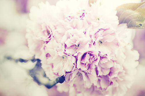 gėlių puokštė,Alyva,gėlių puokštė,violetinė,puokštė,gėlių,žiedas,gėlių puokštė,violetinė,apdaila,purpurinė gėlė,išdėstymas,gėlių fonas,gėlių kompozicija
