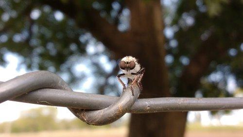 skristi, vabzdys, Re, pobūdį, gyvūnas, entomologija