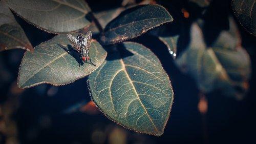 skristi, vabzdys, vabzdžiai, pobūdį, didinimas, žalias