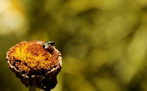 skristi,gėlė,žalias,gamta,flora,vabzdys,Uždaryti,makro,vabzdžių makro,augalas