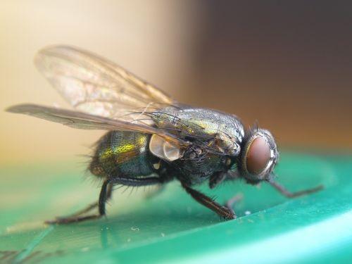 skristi,makro,vabzdžiai