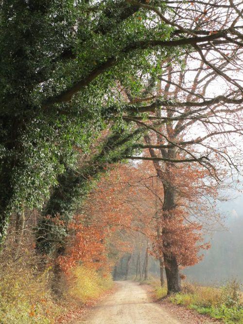 rūkas,bespalvis,miško takas,rudens miškas,išsklaidyta šviesa,idiliškas,medžiai,spalvinga,ruduo,romantiškas,nuotaika,gamta,ivy kraštovaizdis