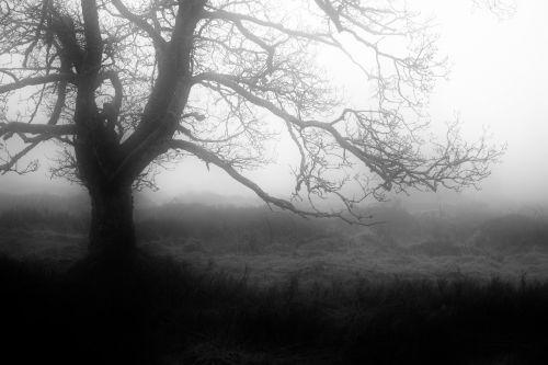 rūkas,ruduo,mistinis,oro temperamentas,nuotaika,gamta,atmosfera,medis,filialai,Kahl,tylus,vienatvė,srutos,kiauras,niūrus,Belgija,venn,gamtos rezervatas,keista,pelkė,žolė,pelkėtas,Moorland,pelkė