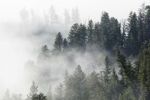 rūkas, rūkas, migla, dykuma, gamta, krioklys, yellowstone & nbsp, nacionalinis & nbsp, parkas, Vajomingas, usa, viešasis & nbsp, domenas, ns, tapetai, fonas, medžiai, vaizdingas, kraštovaizdis, oras, rūkas