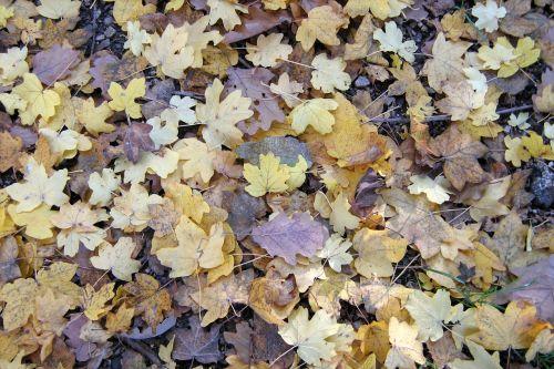 lapija,gamta,sezonai
