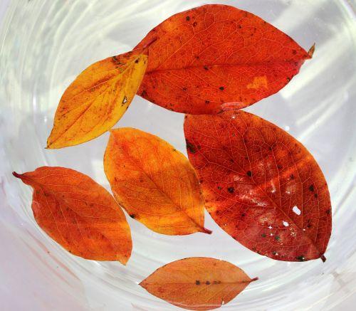 lapija,ruduo,geltonieji lapai,rudens lapija,gamta,textura,spalva