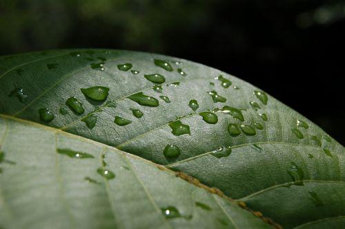 lapija,lietus,žalias lapas,po lietaus,tiesiog pridėti vandens,liūtys