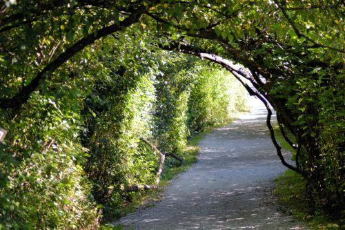 lapija, žalias, lapai, daug, parkas, augalai, medžiai, taika, lapija 2