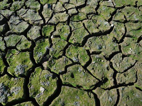 purvas, caked, sausra, sausas & nbsp, žemė, samanos, folsom & nbsp, ežeras, Kalifornija, Folsom ežero sausra 66